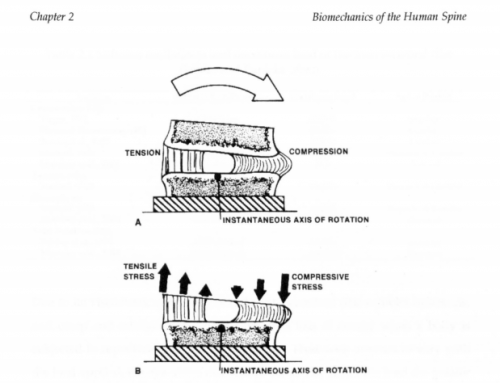 Timing of Forces in Cartilage – What is optimal?