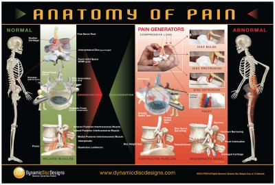 Muscle Tension and Spine