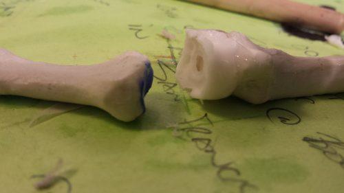 in-vitro, model, synovial joint
